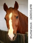 Stock photo portrait of a beautiful brown horse 260031698