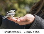 Chickadee On Left Hand