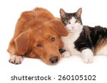 Stock photo cat and dog in a friendly pose 260105102