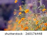 Blossom Orange Flower In A...