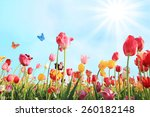 bright sunny day in may with... | Shutterstock . vector #260182148