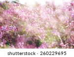 double exposure of spring... | Shutterstock . vector #260229695
