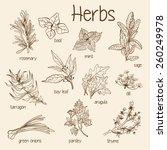 set of vector fresh herbs   Shutterstock .eps vector #260249978