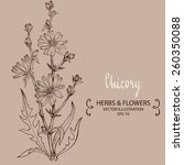 chicory plant. hand drawn...   Shutterstock .eps vector #260350088