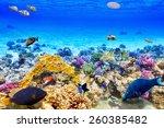 wonderful and beautiful... | Shutterstock . vector #260385482