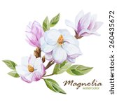 magnolia  watercolor  flowers