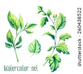 Watercolor Vector Leaves Set