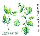 watercolor vector leaves set   Shutterstock .eps vector #260438522