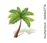 palm tree isolated on white... | Shutterstock .eps vector #260463776