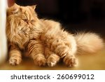 Funny Red Cat Sitting On The...