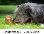 Stock photo big dog and cat friendship 260720846