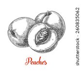 peach  vintage fruit | Shutterstock .eps vector #260835062