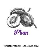 Plum  Vintage Fruit  Vector
