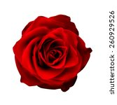 realistic red rose high quality ... | Shutterstock .eps vector #260929526