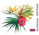 Stock vector vector watercolor strelitzia hibiscus jungle palm trees flowers composition 260943656