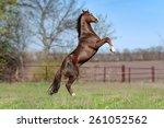 beautiful brown stallion on a... | Shutterstock . vector #261052562