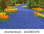 River Of Blooming Muscari...