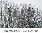 cormorant | Shutterstock . vector #261169352