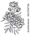 bouquet of peonies | Shutterstock . vector #261196736