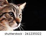 Portrait Of Stripped Kitten On...