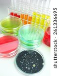 colorful fluid in petridish for ... | Shutterstock . vector #261336695