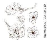 Flowers Hand Drawn  Vector...