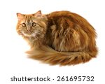 Red Fluffy Cat With Orange Eyes