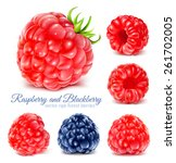 collection of ripe raspberries... | Shutterstock .eps vector #261702005