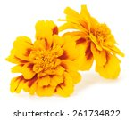 Two Yellow Flowers Isolated On...
