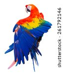Colorful Red Parrot Macaw On...