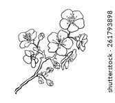 sketch. twig sakura blossoms .... | Shutterstock .eps vector #261793898