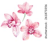 watercolor pink orchid flowers... | Shutterstock .eps vector #261873356