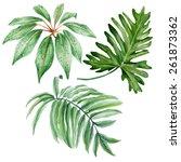 set of watercolor tropical... | Shutterstock .eps vector #261873362