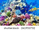 wonderful and beautiful... | Shutterstock . vector #261953732