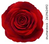 Stock photo red rose isolated on white background love and romantic concept 261962492