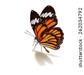 Stock photo beautiful monarch butterfly isolated on white background 262034792