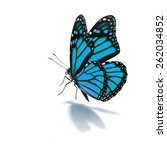 Stock photo beautiful blue butterfly isolated on white background 262034852