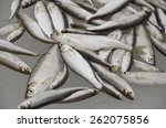 Small photo of Plenty of fish (Alburnus alburnus), lying on the ice, covered with water