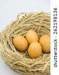 Chicken Eggs In The Straw