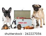 pets first aid | Shutterstock . vector #262227056