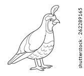 coloring book  quail  bird  | Shutterstock .eps vector #262289165