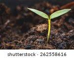 macro young green plant in soil | Shutterstock . vector #262558616