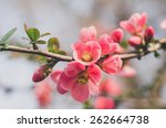 flowers in bloom  hipster style ... | Shutterstock . vector #262664738