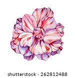 Camellia Flower. A Very...