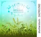 delicate herbal background with ... | Shutterstock .eps vector #262901582