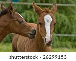 kissing colts | Shutterstock . vector #26299153