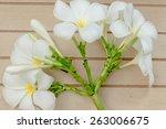 white plumeria on wood... | Shutterstock . vector #263006675