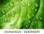 Green Leaf With Drops Of Water...