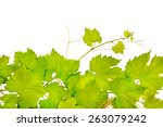 Fresh Grape Leaves Isolated On...