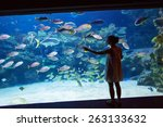 woman observing fish at the... | Shutterstock . vector #263133632